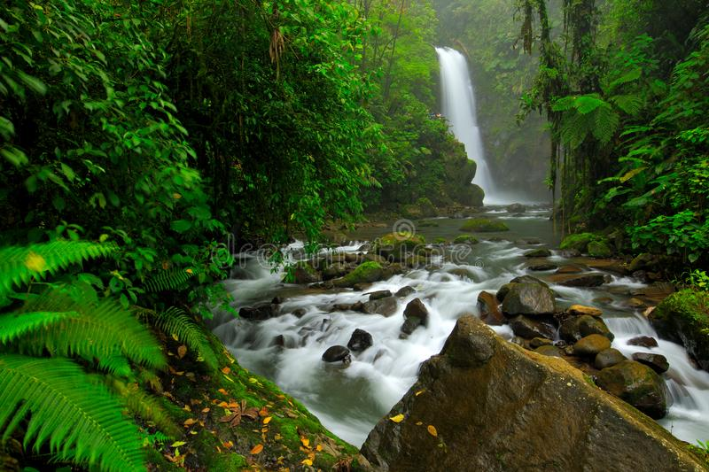 La Paz Waterfall Gardens, with green tropical forest, Central Valley, Costa Rica. Traveling Costa Rica. Holiday in tropic forest. River with white stream royalty free stock photography