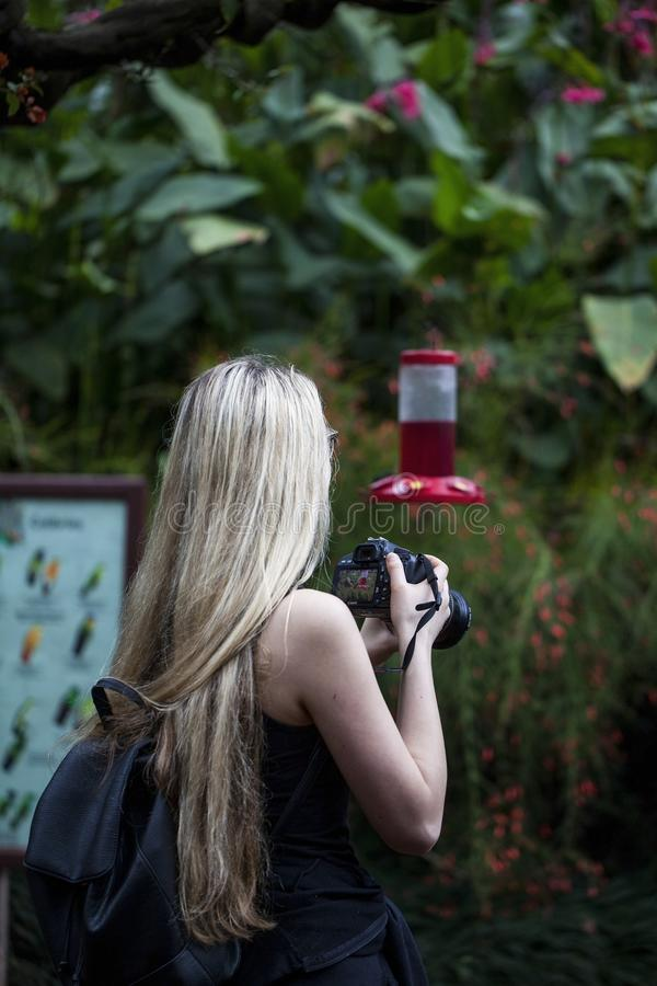 La Paz Waterfall Gardens. La Paz, Heredia/Costa Rica - 21January,2019: young girl taking pictures of hummingbird in a La Paz Waterfall Gardens royalty free stock photo