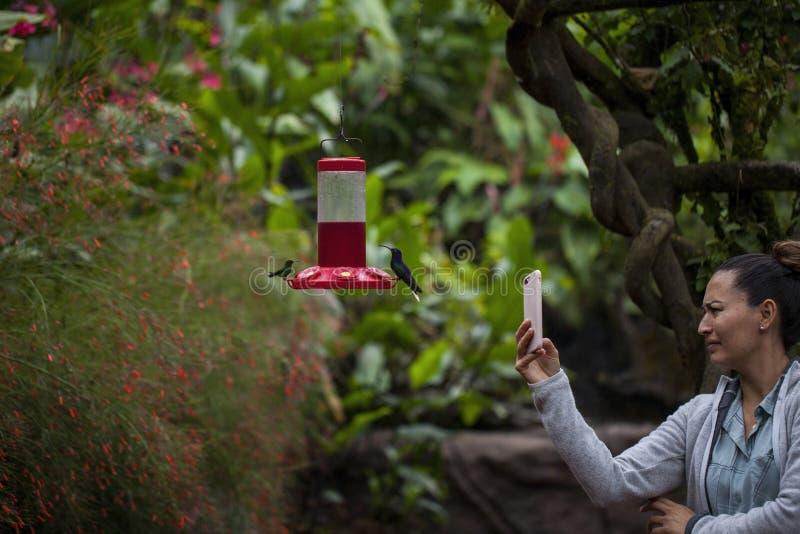 La Paz Waterfall Gardens. La Paz, Heredia/Costa Rica - 21January,2019: woman, tourist, taking pictures of hummingbird in a La Paz Waterfall Gardens in Costa Rica royalty free stock image