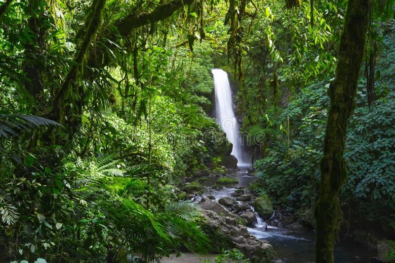 La Paz Waterfall Gardens Nature Park - Costa Rica fotos de archivo libres de regalías