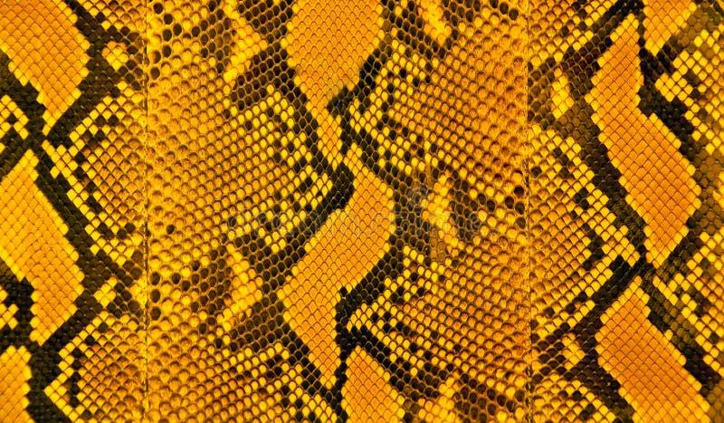 La peau de serpent barre le modèle photo stock