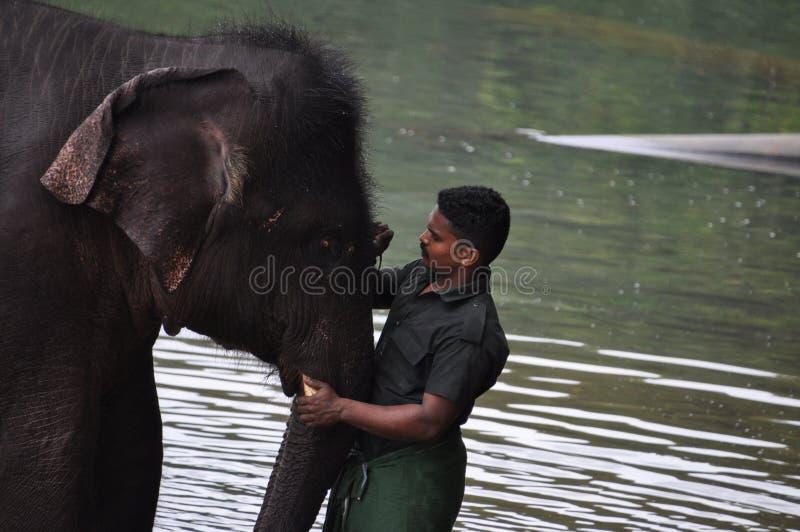 La peinture d'homme se connectent le front d'elefant photographie stock libre de droits