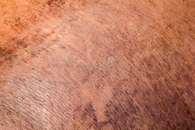 La pelle dell'ippopotamo è spessa, fotografia stock