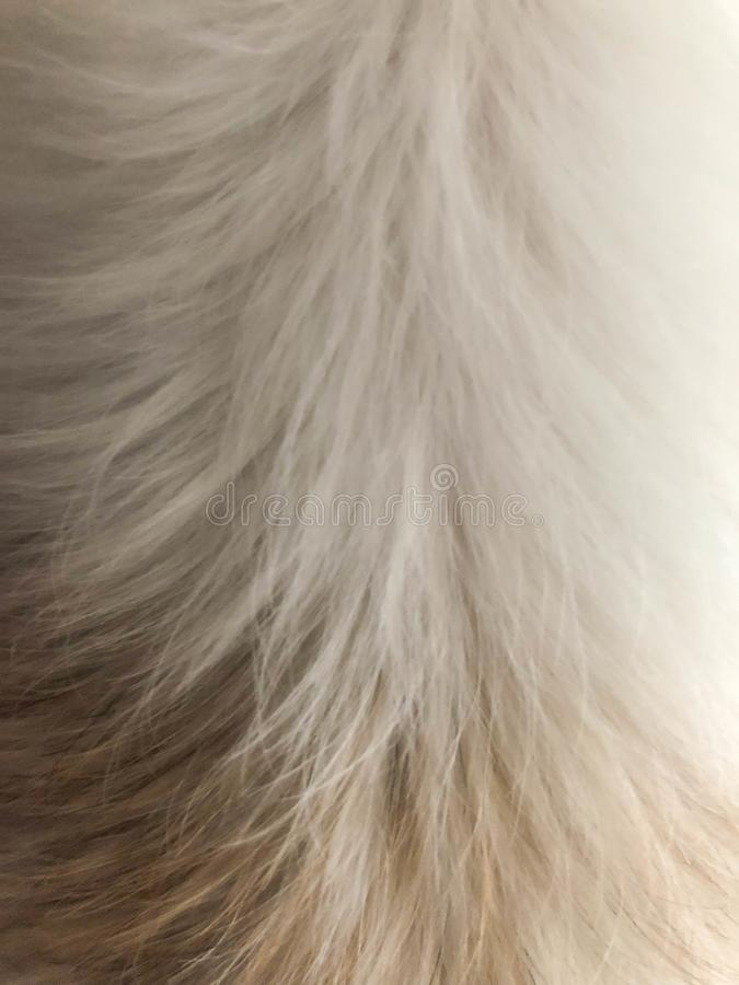 La pelliccia del cane bianco è i precedenti fotografia stock libera da diritti