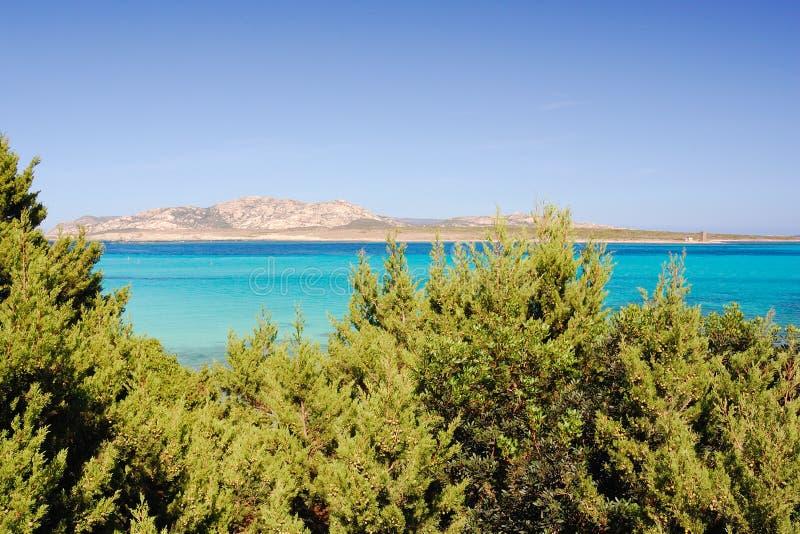 Download La Pelosa beach 10 stock photo. Image of sand, italy - 16422118