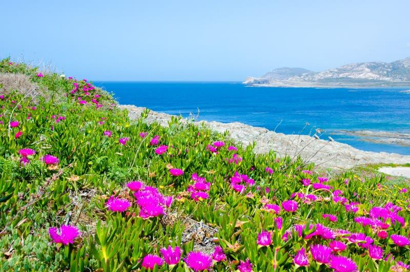 La Pelosa Stintino - costa hermosa de Cerdeña en el norte foto de archivo libre de regalías