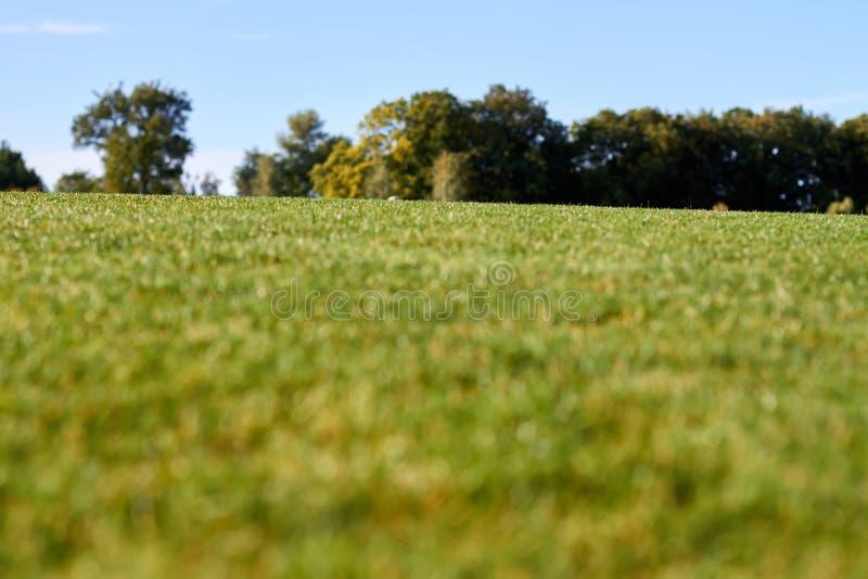 La pelouse de Defocuesed avec l'herbe verte, se ferment  images stock