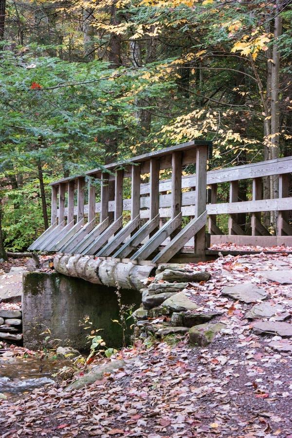La Pennsylvanie Ricketts Glen State Park Landscape photos stock