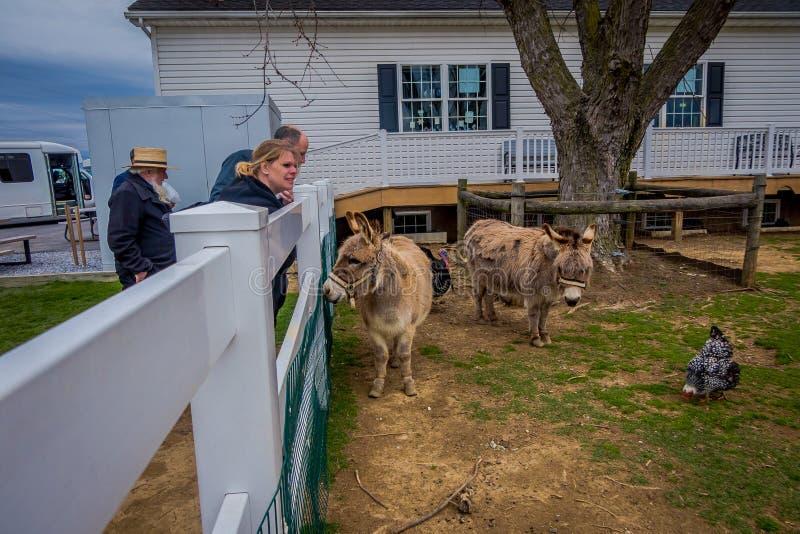 La Pensilvania, U.S.A., 18 APRILE, 2018: Punto di vista all'aperto della gente non identificata che guarda gli animali da allevam fotografia stock