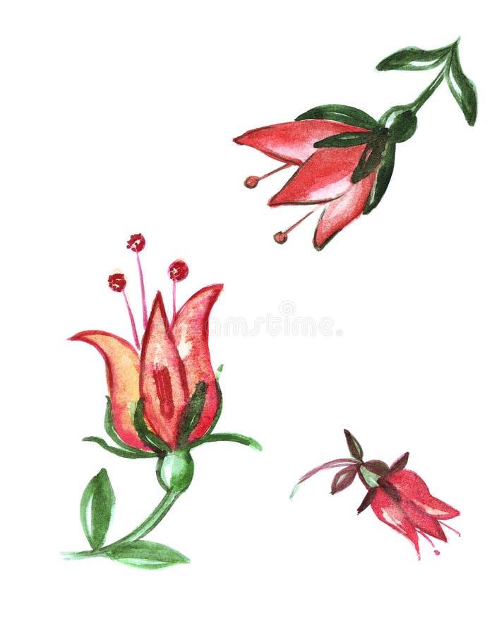 La peonia dell'illustrazione fiorisce con i gambi e le foglie illustrazione di stock