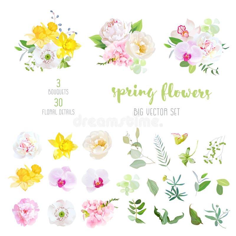 La peonia rosa e bianca, narcisi gialli, selvaggi è aumentato, papavero coltivato, royalty illustrazione gratis