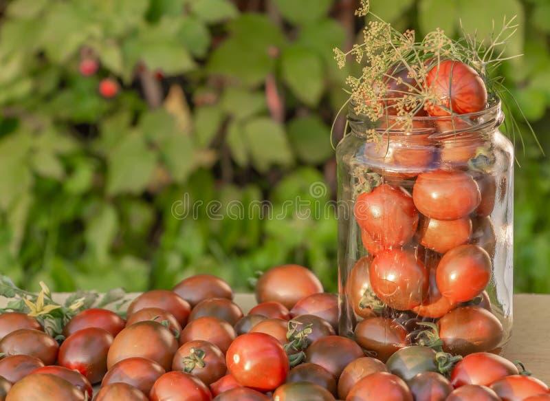La pequeña cereza verde y roja fresca de los tomates está en un tarro de cristal transparente con una puntilla del eneldo en el t imágenes de archivo libres de regalías
