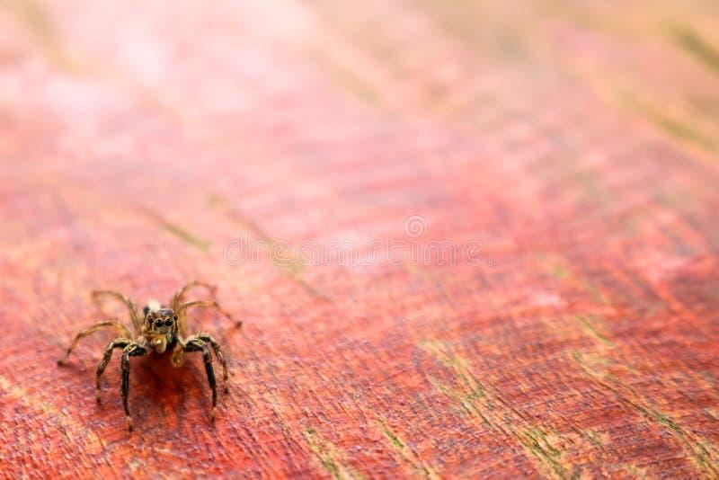 La pequeña colección colorida de las arañas foto de archivo