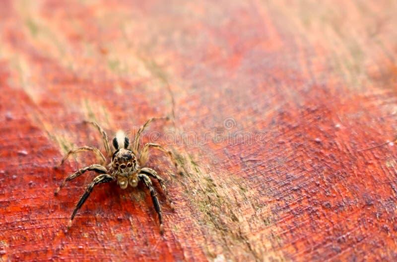 La pequeña colección colorida de las arañas imagenes de archivo