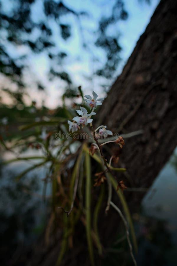 La pequeña flor foto de archivo libre de regalías