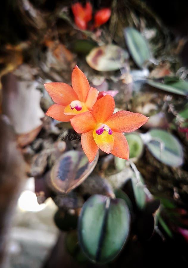La pequeña orquídea fotos de archivo libres de regalías