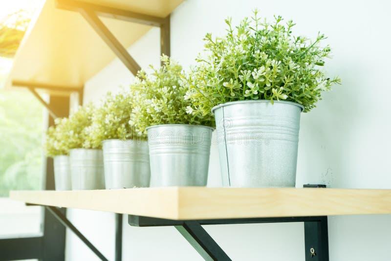 La pequeña planta para adorna el sitio Concepto de los interiores imagen de archivo