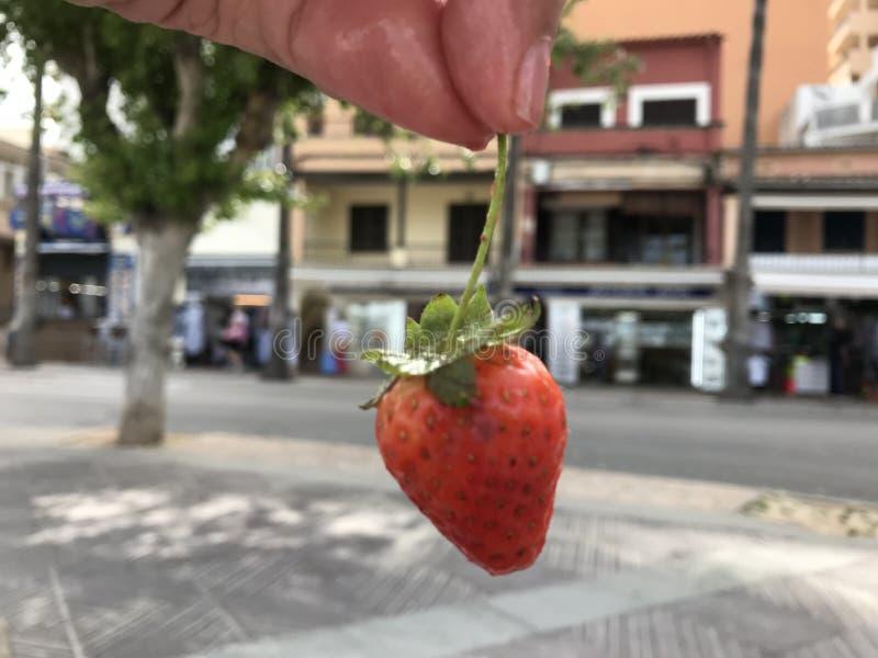 La pequeña playa de Arenal del al de la fresa eating foto de archivo libre de regalías