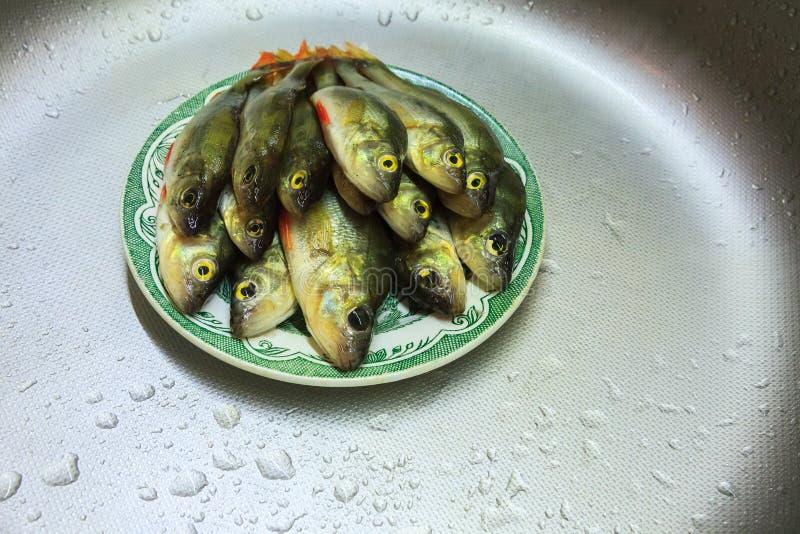 La perche mesur?e fra?che de poissons se situe dans le plat photos stock