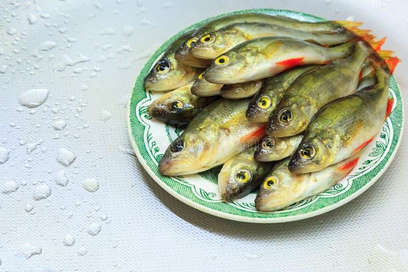 La perche mesur?e fra?che de poissons se situe dans le plat image stock