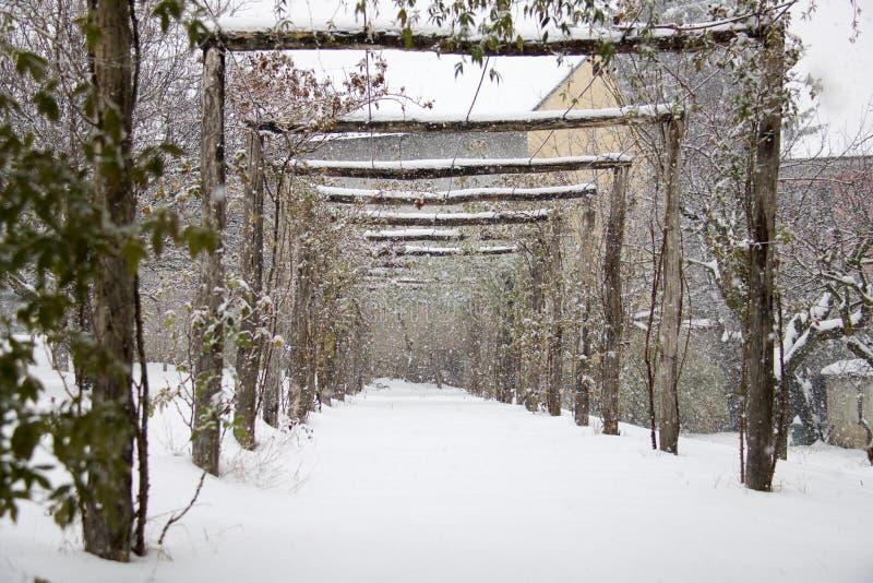 La pergola dei banksiae è aumentato in giardino ornamentale nell'inverno mentre i fotografia stock