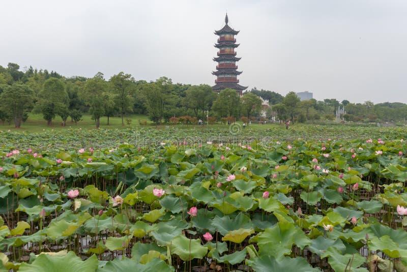 La perspective de la pagoda de Wanshou de lac elephant d'étang-Nan-Tchang de lotus photos stock