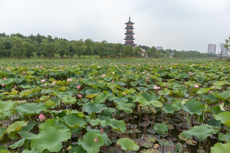 La perspective de la pagoda de Wanshou de lac elephant d'étang-Nan-Tchang de lotus photo stock