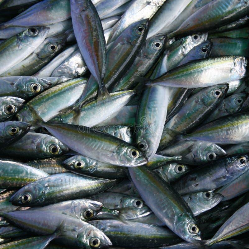 La pesca immagini stock