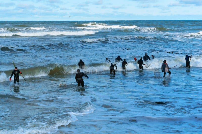 La pesca per l'ambra, la gente prende le onde ambrate fotografia stock libera da diritti