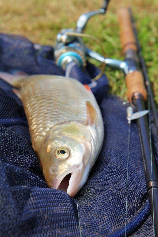 La pesca prende l'erba fotografia stock