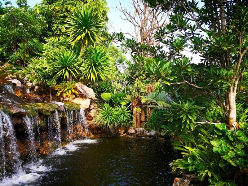 La petite cascade entourée par un grand choix d'arbustes, qui sont photographie stock libre de droits