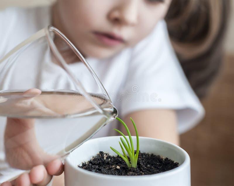 La petite fille d'enfant en bas âge arrose la jeune usine photo stock