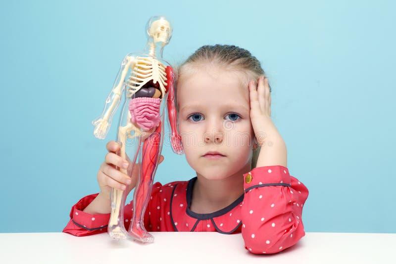 La petite fille explorent la structure du corps humain images libres de droits