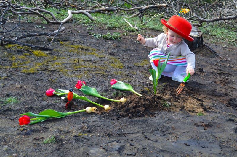 La petite fille plante des tulipes au-dessus de la terre brûlée photos libres de droits