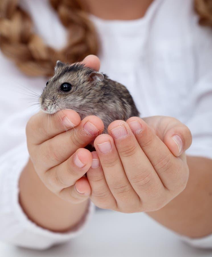 La petite fille remet le hamster de fixation photographie stock libre de droits