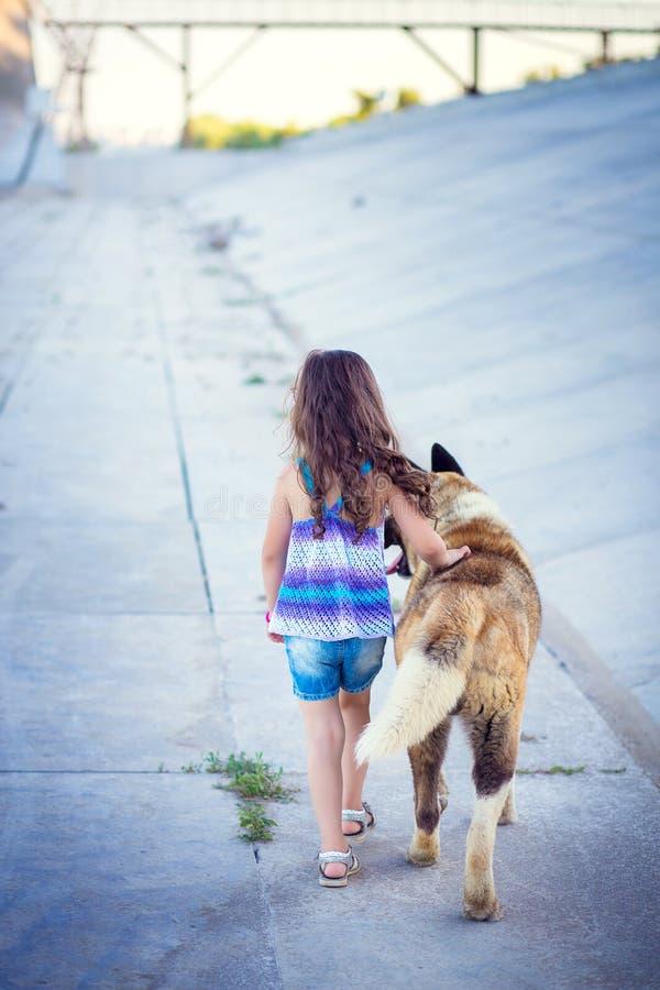 La petite fille sort avec l'ami - un chien de race un Akita photos stock