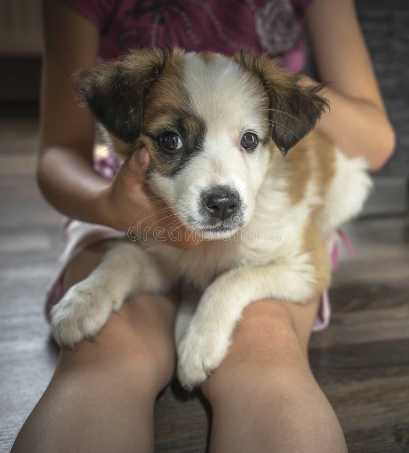 La petite fille tient un petit chien photographie stock libre de droits
