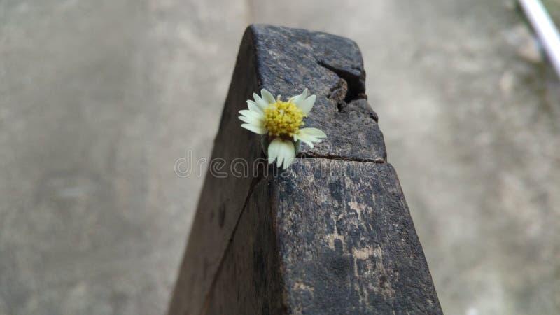 la petite fleur image libre de droits