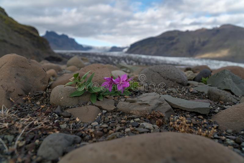 La petite fleur colorée se développe sur la surface approximative image stock