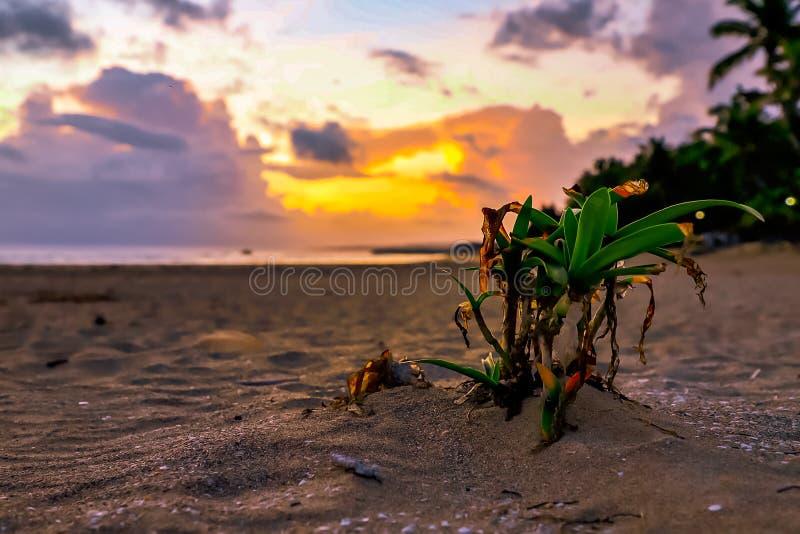 La petite paume se développe sur la plage Lever de soleil à l'océan dans les Caraïbe Puerto Plata images libres de droits