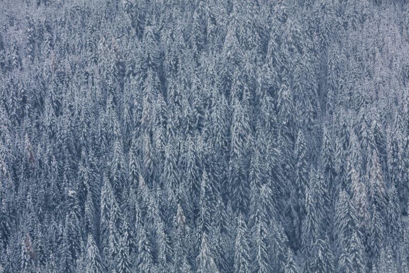 La photo aérienne de la vallée et de la neige de glacier a couvert la forêt f de forêt photo libre de droits