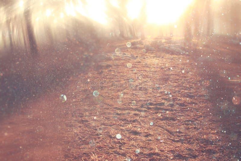 La photo abstraite brouillée de l'éclat de lumière parmi les arbres et le bokeh de scintillement s'allume images libres de droits