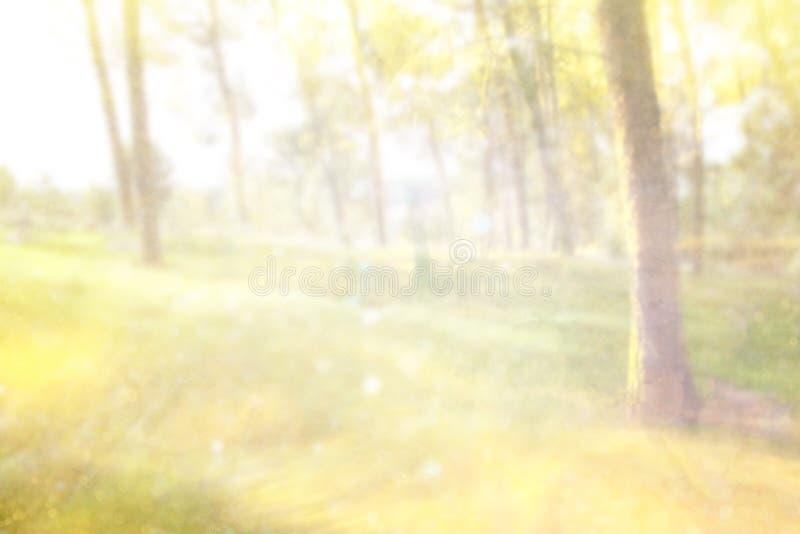 La photo abstraite de l'éclat de lumière parmi les arbres et le bokeh de scintillement s'allume l'image est brouillée et filtrée photos stock