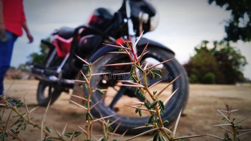 La photo des épines cliquent sur à Mathura vrindavan image stock