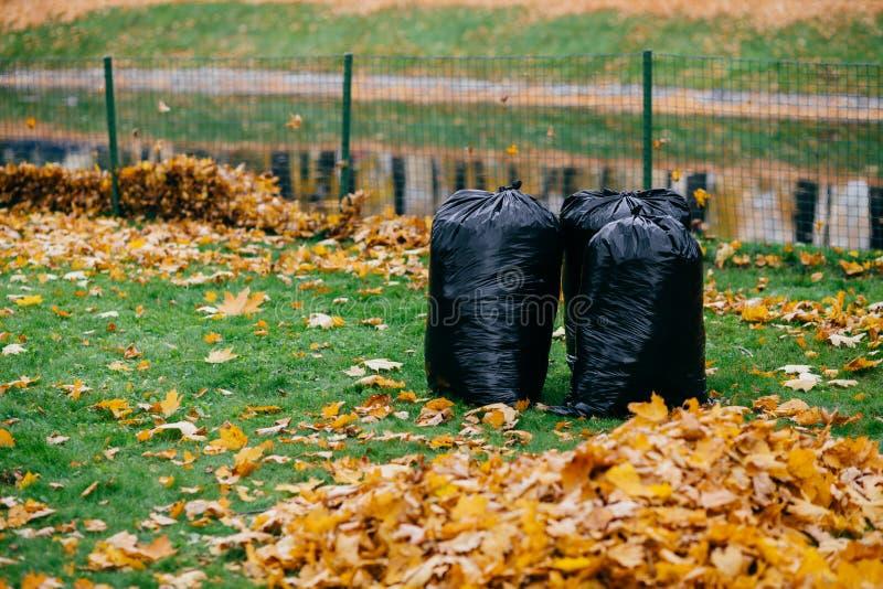 La photo des sacs de déchets noirs se tiennent en parc, rempli de feuilles tombées par automne sur le fond de barrière Rues et dé image libre de droits