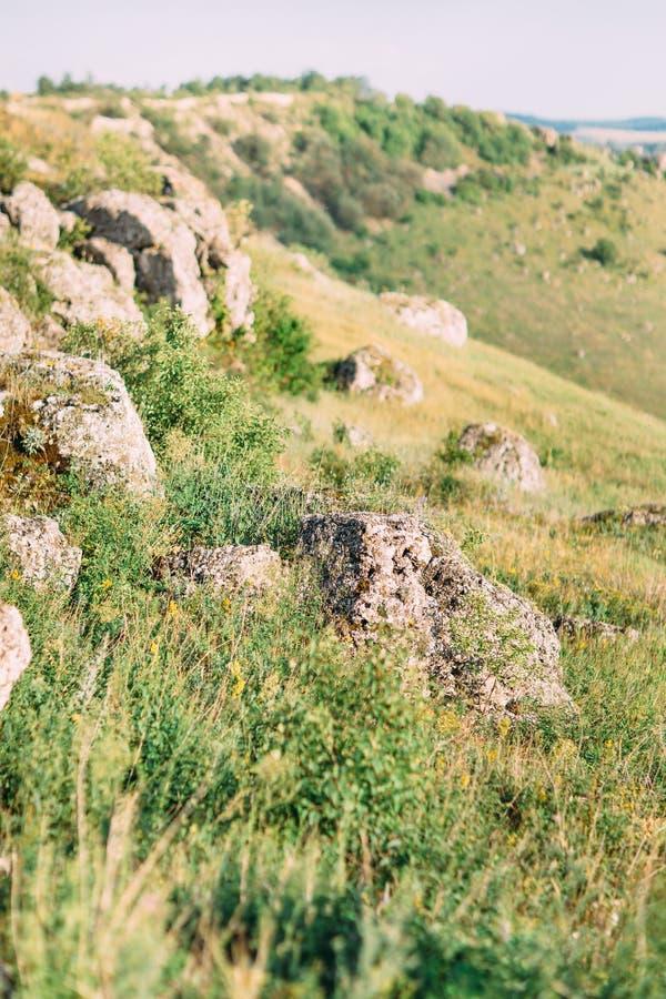 La photo latérale des montagnes envahies avec l'herbe verte, herbes, petites fleurs jaunes image libre de droits
