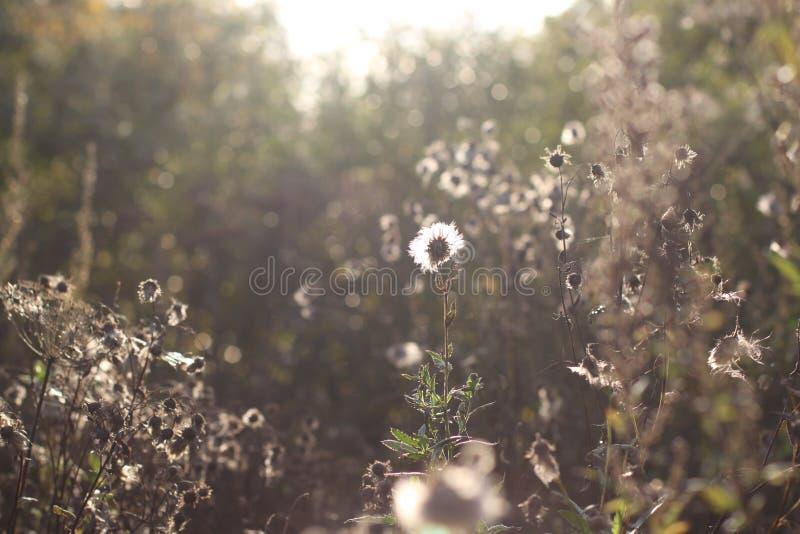 La pianta è alla luce solare diretta un giorno soleggiato fotografia stock libera da diritti