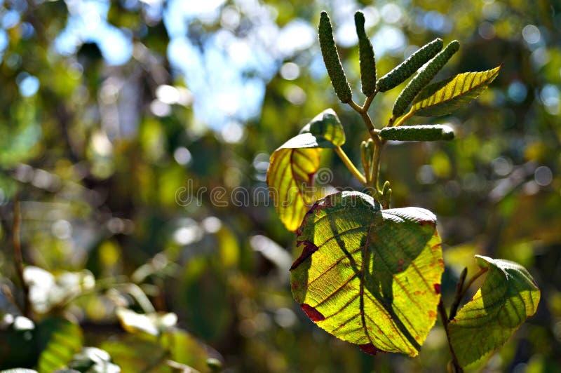 La pianta è viva fotografie stock libere da diritti