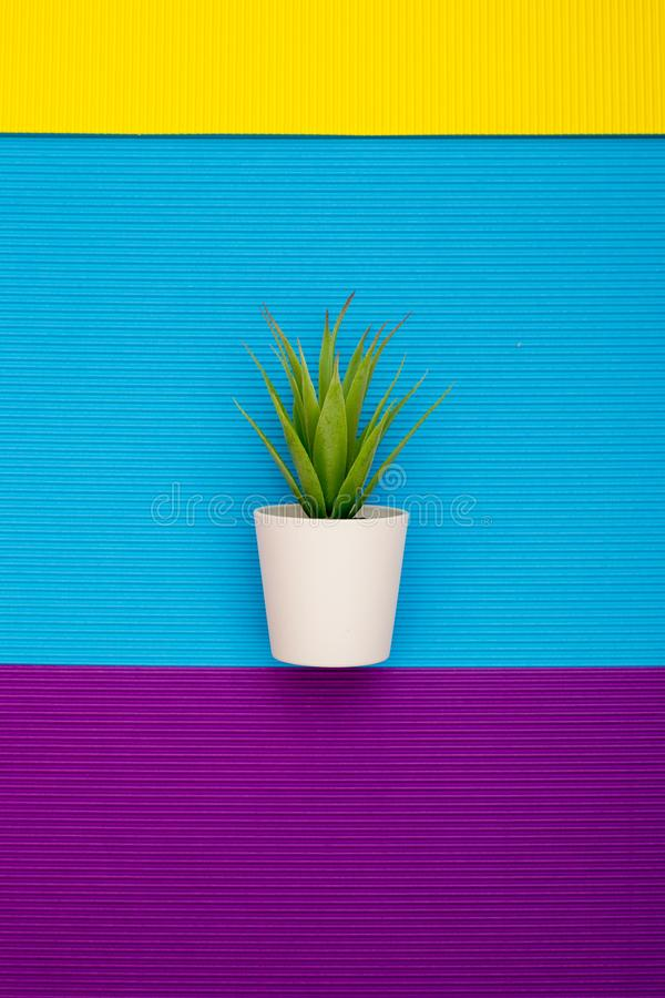 La pianta da appartamento in un vaso su un fondo astratto di carta colorata riveste immagine stock