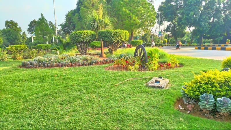 La pianta del cntt di Wah fiorisce la natura dell'erba fotografie stock